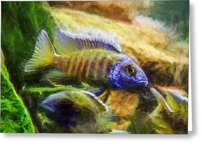 Amazing Peacock Cichlid Greeting Card