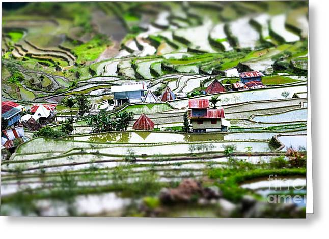 Amazing Tilt Shift Effect View Of Rice Greeting Card