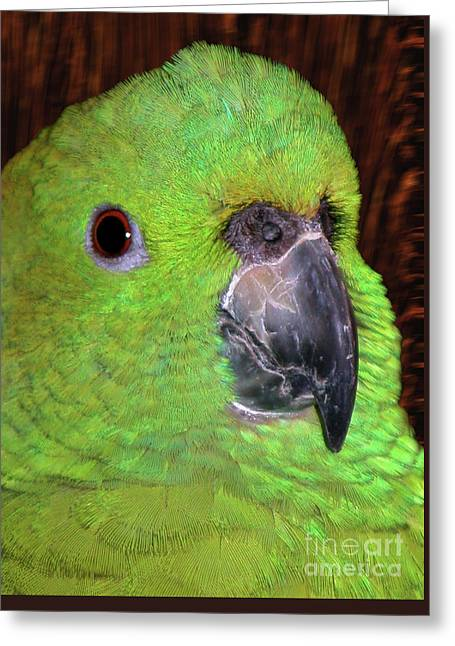 Greeting Card featuring the photograph Amazon Parrot by Debbie Stahre