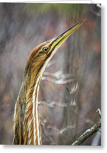 American Bittern Greeting Card