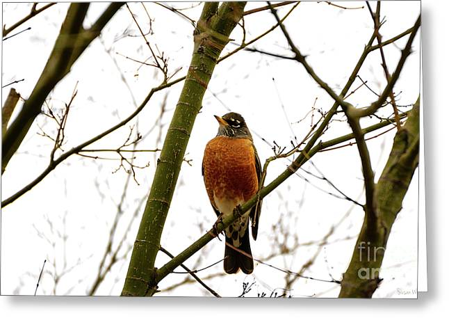 American Robin Perching In A Wintertime Tree Greeting Card