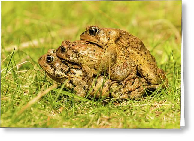 American Toad Western Brooke Pond, Grose M Greeting Card