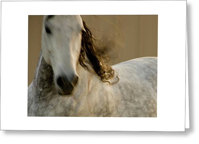 Greeting Card featuring the photograph Americano 1 by Catherine Sobredo