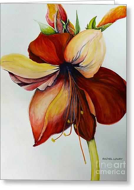 Amerylis/amaryllis  Greeting Card