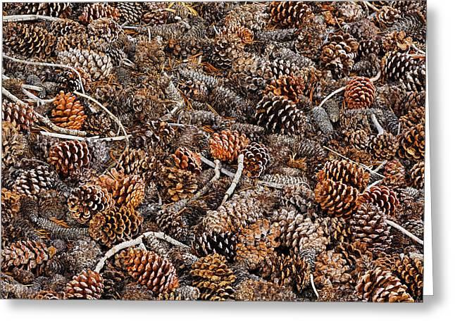 Ancient Bristlecone Pine Cones Greeting Card by Adam Jones