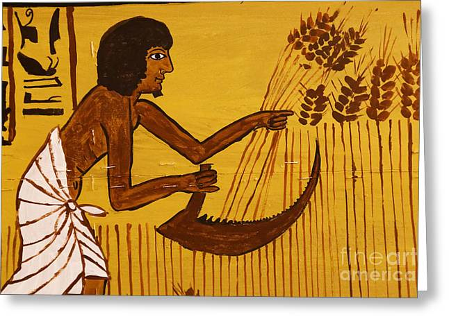 Greeting Card featuring the photograph Ancient Egypt Farmer by Sue Harper
