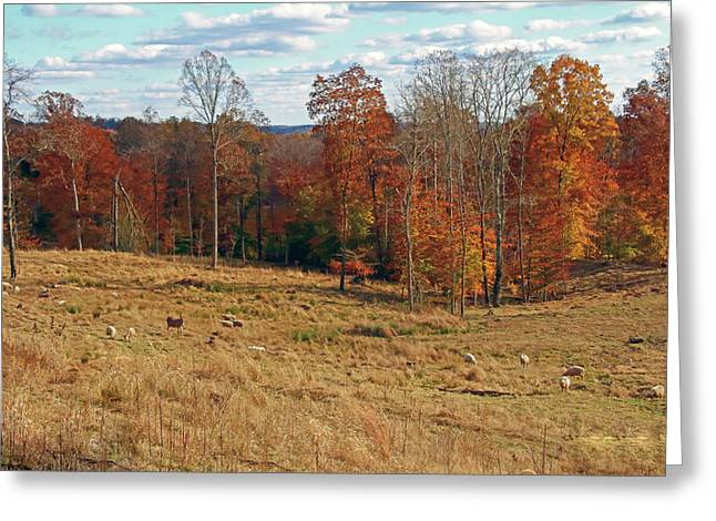 Greeting Card featuring the photograph Animals Grazing On A Fall Day by Angela Murdock