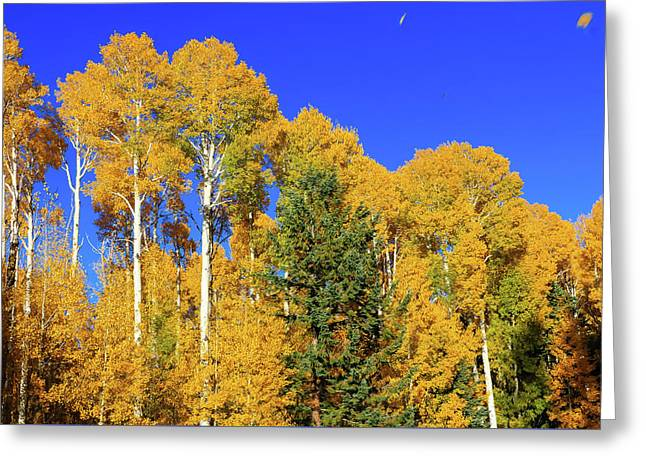 Arizona Aspens And Blowing Leaves Greeting Card