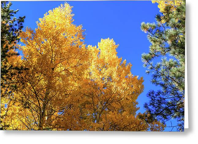 Arizona Aspens In Fall 2 Greeting Card