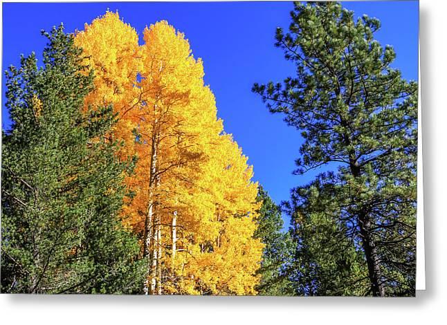 Arizona Aspens In Fall 4 Greeting Card