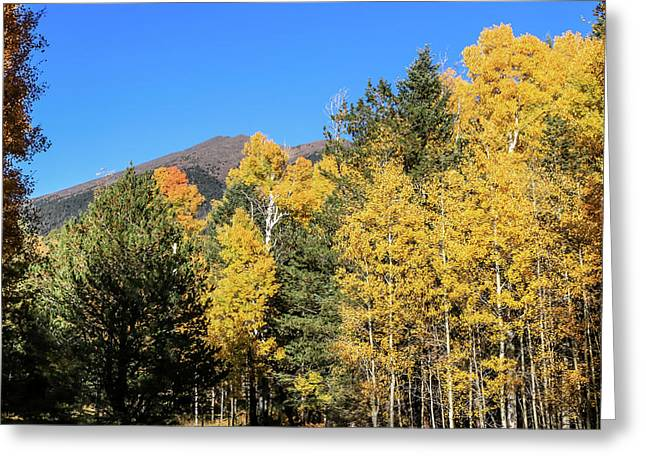 Arizona Aspens With Mountains Greeting Card