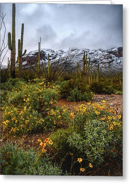 Arizona Flowers And Snow Greeting Card