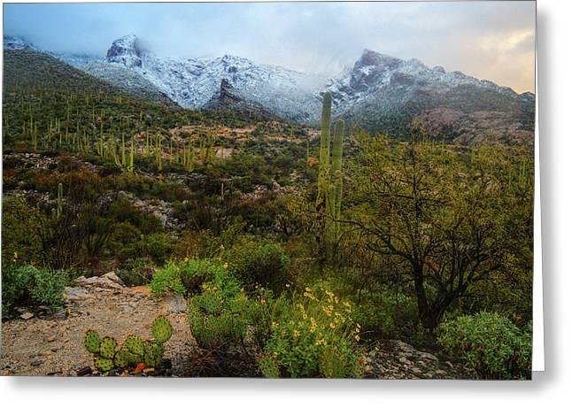 Arizona Winter Light Greeting Card