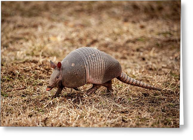 Greeting Card featuring the photograph Armadillo by Jeff Phillippi
