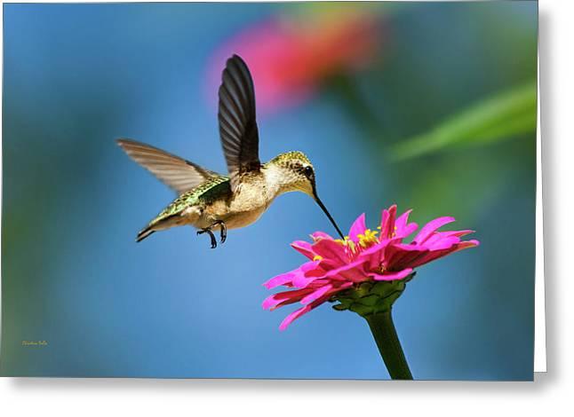 Art Of Hummingbird Flight Greeting Card