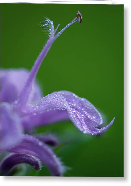 Greeting Card featuring the photograph Artistry In Nature by Dale Kincaid