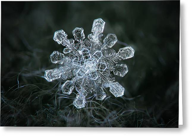 Greeting Card featuring the photograph Real Snowflake - 04-feb-2018 - 1 by Alexey Kljatov