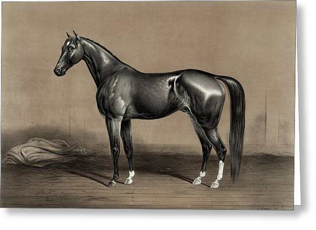 Trotting Champion Stallion - Mambrino - Vintage Horse Racing Print Greeting Card