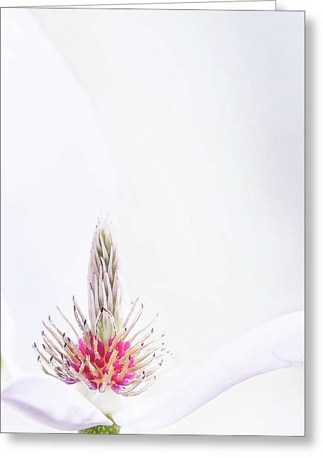 The Heart Of A Magnolia Greeting Card