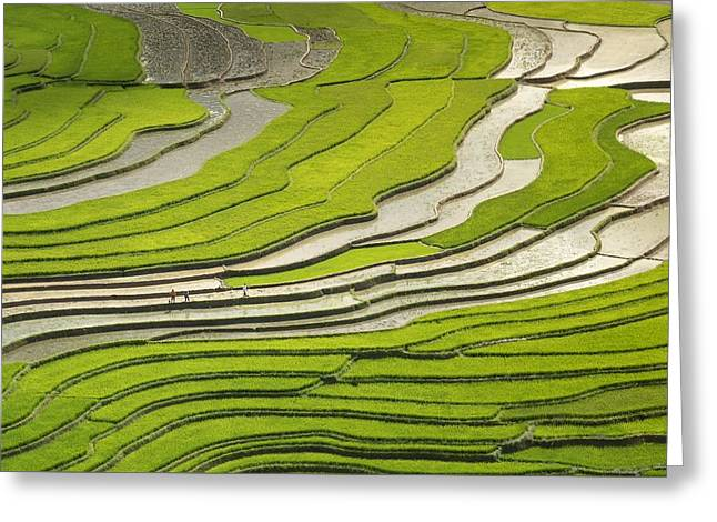 Asian Rice Field Greeting Card