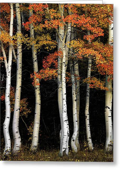 Greeting Card featuring the photograph Aspen Contrast by Leland D Howard