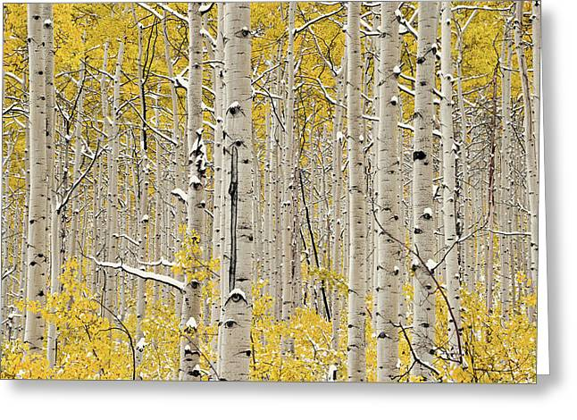 Aspen Forest In Autumn Greeting Card by Leland D Howard