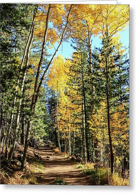Aspen Trail Greeting Card