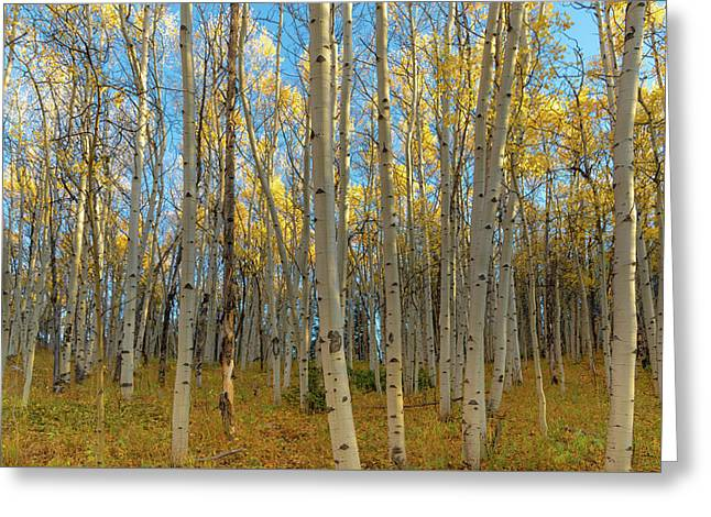 Aspens Greeting Card