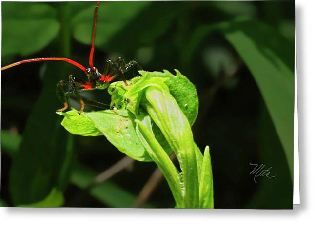 Assassin Bug Greeting Card