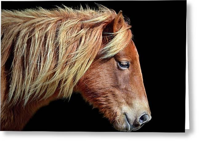 Assateague Pony Sarah's Sweet Tea Portrait On Black Greeting Card
