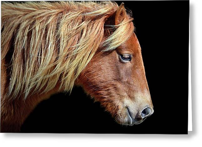 Assateague Pony Sarah's Sweet Tea Portrait On Black Greeting Card