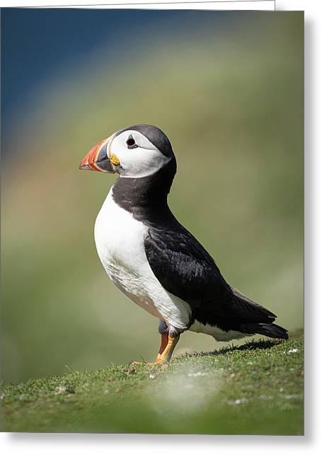 Atlantic Puffin - Skomer Island Greeting Card