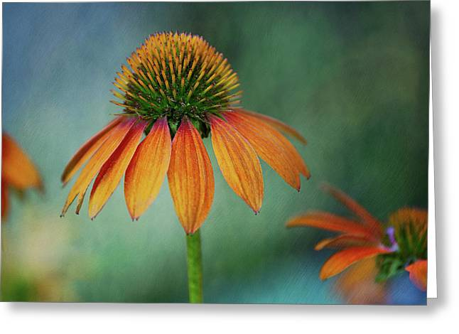 Greeting Card featuring the photograph Attracting Attention by Dale Kincaid