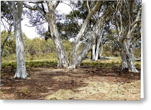 Greeting Card featuring the photograph Australian Bush Scene by Fran Woods