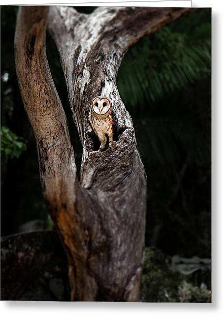 Greeting Card featuring the photograph Australian Masked Owl by Rob D Imagery