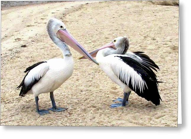Greeting Card featuring the photograph Australian Pelicans by Anthony Dezenzio