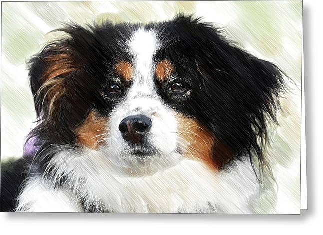 Australian Shepherd - Dwp3237735 Greeting Card