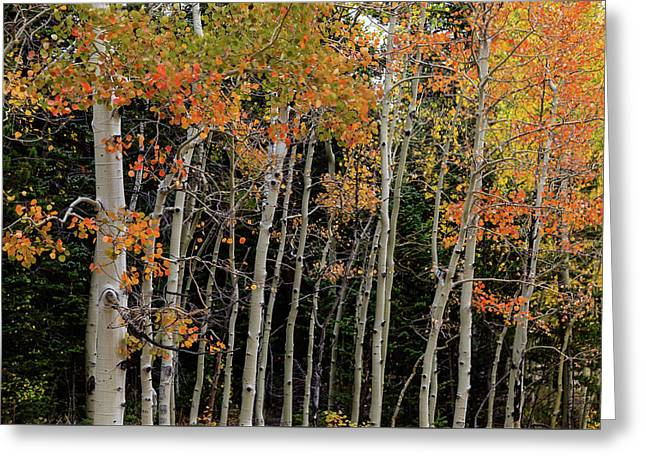 Greeting Card featuring the photograph Autumn As The Seasons Change by James BO Insogna