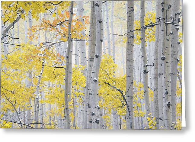Greeting Card featuring the photograph Autumn Aspens 2 by Leland D Howard