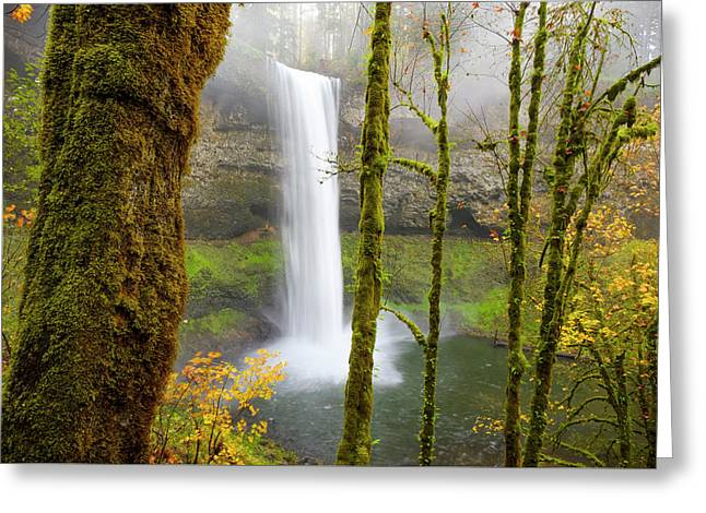 Greeting Card featuring the photograph Autumn At Silver Falls State Park by Nicole Young