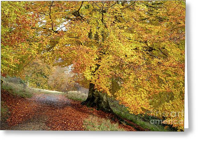 Autumn Beech Walk Greeting Card by Tim Gainey