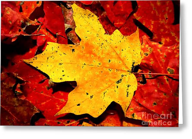 Autumn Beige Yellow Leaf On Red Leaves Greeting Card