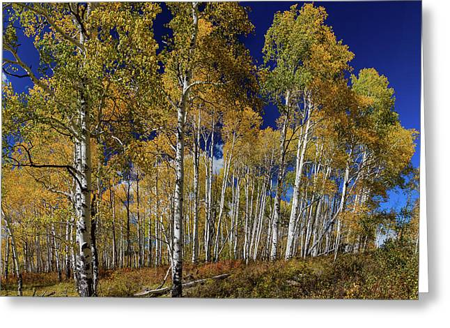 Greeting Card featuring the photograph Autumn Blue Skies by James BO Insogna