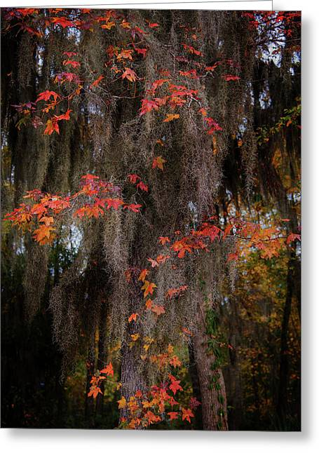 Autumn Color In Spanish Moss Greeting Card