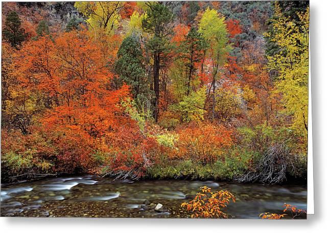 Autumn Creek Greeting Card by Leland D Howard