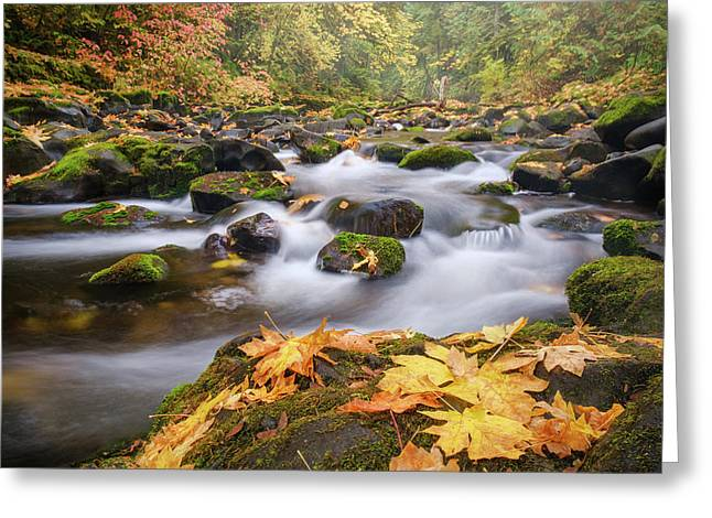 Greeting Card featuring the photograph Autumn Creek by Nicole Young