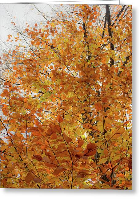 Autumn Explosion 1 Greeting Card