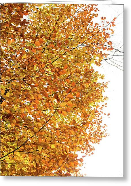 Autumn Explosion 2 Greeting Card