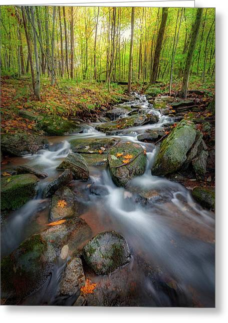 Greeting Card featuring the photograph Autumn Falling 2 by Bill Wakeley