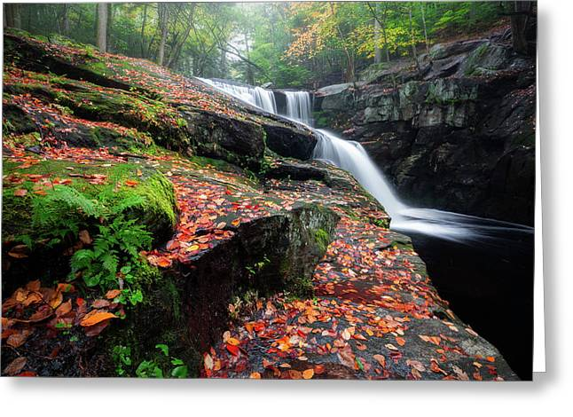 Greeting Card featuring the photograph Autumn Falling 3 by Bill Wakeley